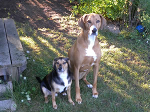 Toby and Jenna Pure Mutt Pets of the Month